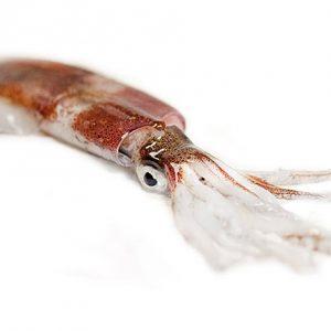 calamar de don camaron