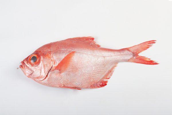 palometa roja don camarón