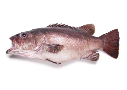 pescado cherne