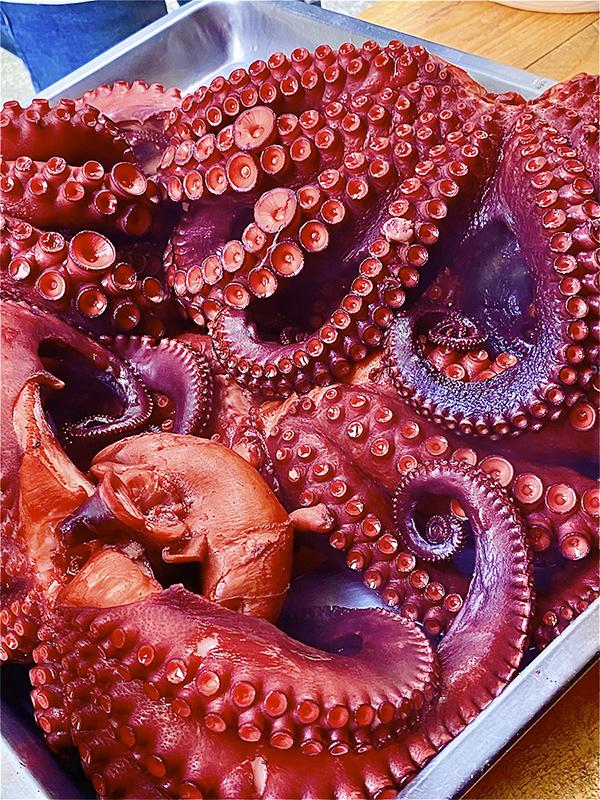 tentaculos de pulpo